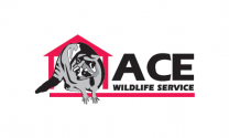 Ace Wildlife Service Inc